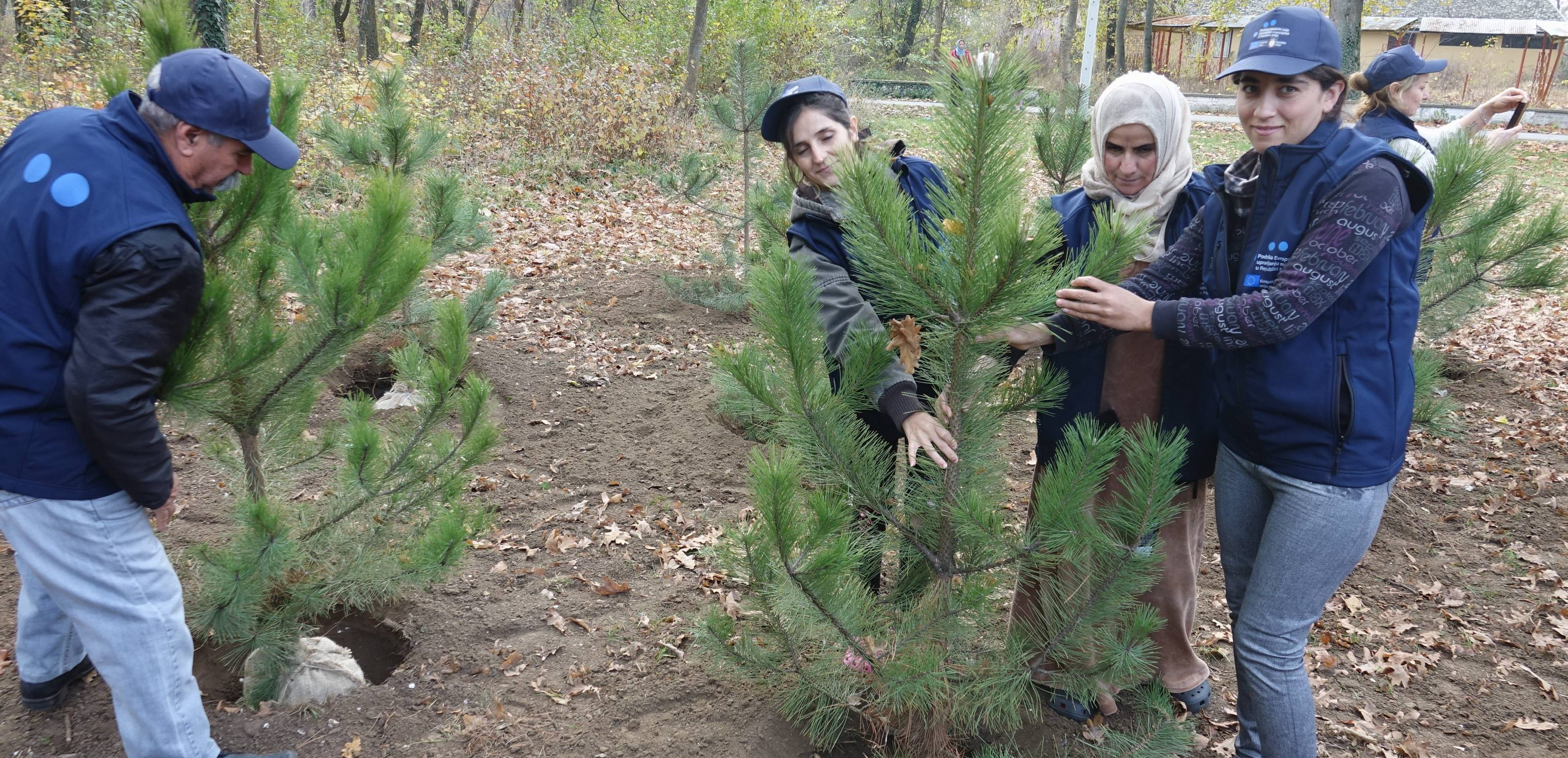 Migrants and citizens of Sombor planted 150 pine seedlings