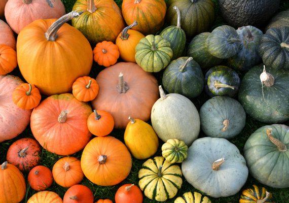 Transpozicija direktive o očuvanju starih poljoprivrednih biljnih sorti